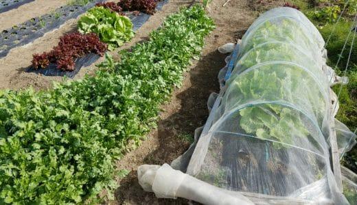 家庭菜園のプロが教えます!収穫を増やすための土壌改良の方法
