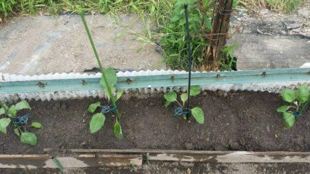 収穫量を上げるための家庭菜園の種と苗の選び方!何処でどんなものを選ぶべきか教えます
