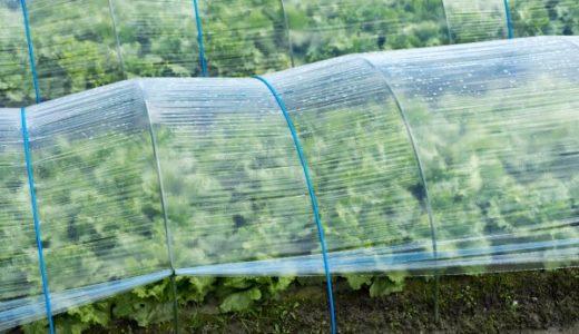 ビニールハウスの効能とデメリット!温度調節に気を付けて野菜を凍傷や雨風から守ろう