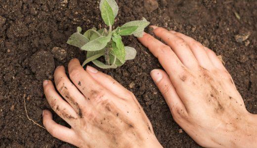 良く育つ苗の植え方!季節で変わる時期などの植えるポイント3つ
