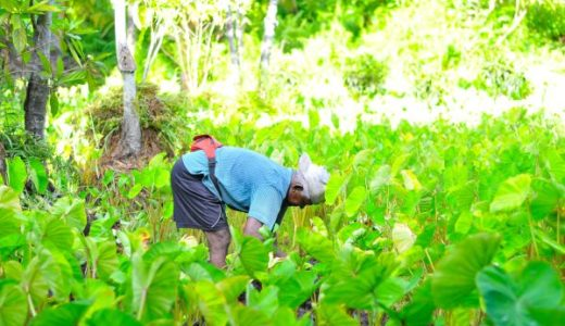 家庭菜園の害虫対策は?農薬を使わずオーガニックの野菜を育てるためのポイント9つ